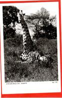 KENYA   GIRAFFE    AFRICAN WILDLIFE  SERIES RP - Gatos