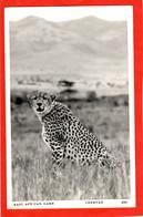 KENYA   CHEETAH     EAST AFRICAN GAME SERIES RP - Gatos