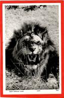 KENYA  LION ROARS  RP  EAST AFRICAN GAME SERIES - Leones