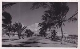 QJ - DAHOMEY -  Porto-Novo, Avenue... (neuf) - Dahomey