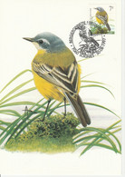 BUZIN.  LA BERGERONNETTE PRINTANIERE - 1985-.. Pájaros (Buzin)