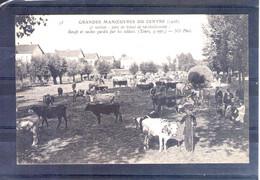 Grandes Manoeuvres Du Centre 1908. 9e Section. Parc De Ravitaillement De Bétail - Manöver