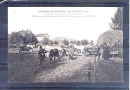 Grandes Manoeuvres Du Centre 1908. 9e Section. Parc De Ravitaillement De Bétail (tours 9 Sept) - Manöver