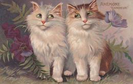 Cpa ANEMONE CANDEUR 1905 - Katzen