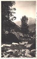 FR66 PYRENEES ORIENTALES - Carte Photo CHAUVIN Perpignan - Tampon Sec - Famille De Cochons  - Belle - Banyuls Sur Mer