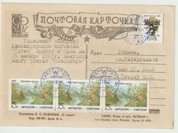 Kirghizistan. Kyrgyzstan ..Carte Postale. Faisans . Pheasants - Kirghizstan
