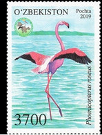 Ouzbekistan. Uzbekistan 2019. Flamant Rose. Pink Flamingo - Flamingos