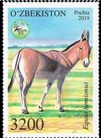 Ouzbekistan. Uzbekistan 2019. Hémione . âne Sauvage. Wild Donkey - Chevaux