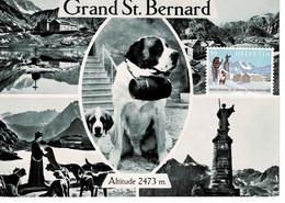 CARTE MAXIMUM MONTAGNE BERG MOUNTAIN GRAND ST BERNARD SUISSE 1989 - Cartas Máxima