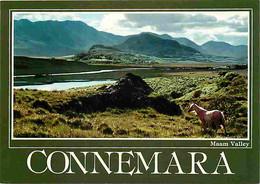 Irlande - Galway - Connemara - Maam Valley - Chevaux - Carte Neuve - Ireland - CPM - Voir Scans Recto-Verso - Galway