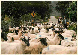 Irlande - Galway - Connemara - On The Road To Maam Cross - Moutons - Ireland - CPM - Voir Scans Recto-Verso - Galway