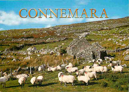 Irlande - Galway - Paturages - Moutons - Ireland - CPM - Voir Scans Recto-Verso - Galway