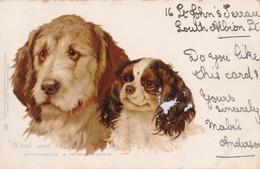 AM81 Animals - Dog Study, Work And Play, Otterhound And Prince Charlie - UB, Tuck - Perros