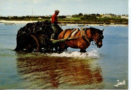 Couleurs De Bretagne : Charretée De Goémon Attelage Cheval (métiers) Cp Vierge N°7 Jack - Bretagne