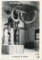 PARIS (75) Photo. Jardin Des Plantes - Le Mammouth De Sibérie - Musei