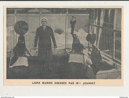CIRQUE LIONS MARINS DRESSEES PAR MME JEANNET CPA BON ETAT - Circo