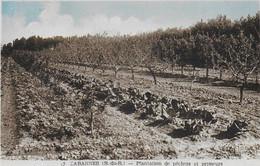 """CABANNES """" Plantation De Pechers Et Primeurs """"    N°4081 - Otros Municipios"""