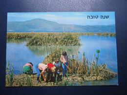 ISRAEL GOLAN HULA MARSHES GALILEE POSTCARD PICTURE PHOTO POST CARD ANSICHTSKARTE CARTOLINA CARTE POSTALE CACHET STAMP - Israel