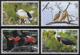 Tonga 2020, Ibis, 4val - Tonga (1970-...)