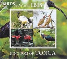 Tonga 2020, Ibis, 4val In Block - Tonga (1970-...)