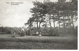 20 Calmpthout Heide Boschzicht  Hoelen 5001 - Kalmthout