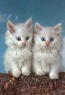 DC4805 - Ak Motivkarte Katze Cat Cats Peper - Gatos