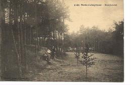 56 Calmpthout Heide Boschzicht . Hoelen 6182 - Kalmthout