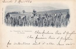 Marne - Les Vendanges En Champagne - Un Hordon - Otros Municipios