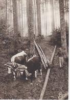 Carte Postale: LES VOSGES Forêt: Le Débardage Avec Des Boeufs - Equipaggiamenti
