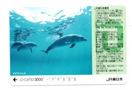 Dauphin Dolphine Poisson Carte Prépayée Card Japon (D 1095) - Dolphins