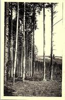 69 - MONSOLS - Bois De Sapins - Altri Comuni