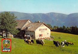 68 - Mittlach - Ferme Auberge Du Schnepfenried - Vente De Fromages De Munster - Sonstige Gemeinden