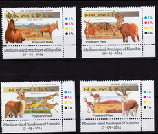 Umm - Antelope 2014 - Namibia (1990- ...)
