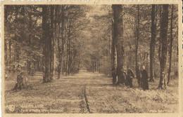 Martelange  Forêt D' Anlier  ( Voie Romaine) - Martelange