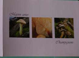 Petit Calendrier 2008 Champignon Macros Series - Format Carte Postale Double - Klein Formaat: 2001-...