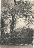 W5998 Campobasso - Castel Monforte - Panorama / Viaggiata 1951 - Campobasso
