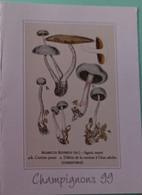 Petit Calendrier De Poche 1999 Champignon Agaric Azuré Pharmacie Lacapelle Biron - Klein Formaat: 1991-00