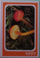 Petit Calendrier De Poche 1997 Champignon Hygrocybe Insipida - Klein Formaat: 1991-00