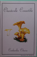 Petit Calendrier De Poche 1995 Champignon Chanterelle Comestible - Klein Formaat: 1991-00