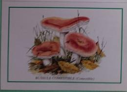 Petit Calendrier De Poche  2000 Champignon Russule Comestible - Klein Formaat: 1991-00