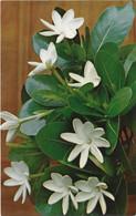 Tiare Tahiti Fleur Nationale Blanche Cireuse Et Parfumée Poussant Exclusivement A Tahiti - Tahiti