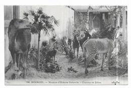 Bourges Muséum D' Histoire Naturelle Chameau Et Zèbre - Bourges