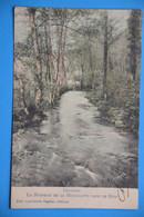 Gedinne 1910: Le Ruisseau De La Houillette Dans Le Bois En Couleurs - Gedinne