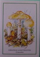 Petit Calendrier De Poche 1999 Champignon Limacelle à Gouttelettes - Klein Formaat: 1991-00