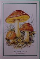 Petit Calendrier De Poche 1999 Champignon Bolet Granulé - Klein Formaat: 1991-00