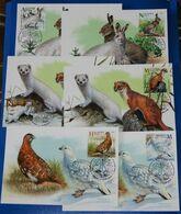 Belarus 2020 Fauna Seasonal Variations Hare Weasel Partridge Bird Birds Mammals 6x MaxiCards MC - Bielorrusia