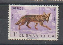 El Salvador  Coyote; Dos Endommagé - Perros