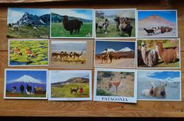 Peru Bolivia Ecuador Chile Lot 20 CP Neuves Alpaca Lama Vicuna Guanaco Llama Altiplano Andes - Autres