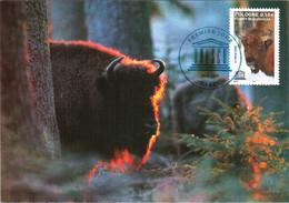Carte Maximum Timbre De Service 132 UNESCO Bison De Bialowieza, TBE 1er Jour 26 11 2005 Paris (75) - 2000-09