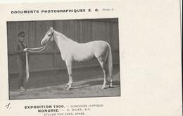 EXPO 1900  O.BALAN ETALON PUR SANG HONGRIE - Paarden